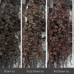 Delightful Ivy HD Vine Retexture Mod for Fallout 4